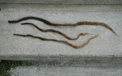 hair2_pos.jpg