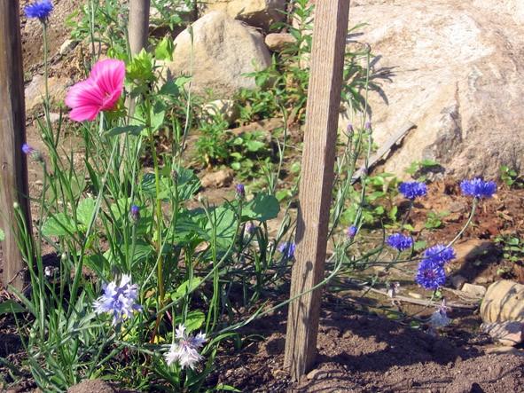 pinkandblueflowers07_pos.jpg